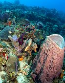 Beautiful Caribbean Reef