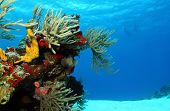 stock photo of playa del carmen  - Corals on White Sand with Surfacing Divers in the Background Cozumel Mexico - JPG