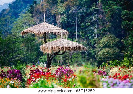beautiful flowers garden at doi angkhang Mountain Chiang Mai Thailand