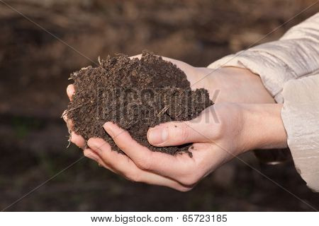 female hands with black soil