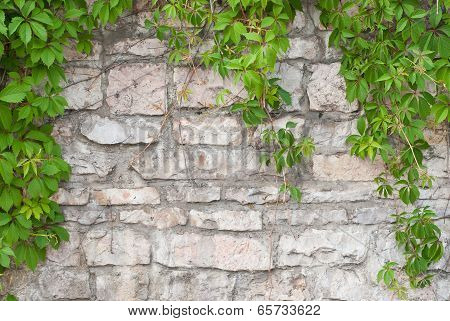 Stone Wall With Green Ivy Background