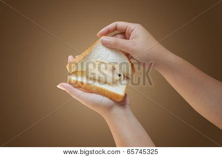 Hand Holding Bread With Hamster