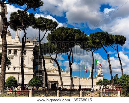Pine trees in Rome, near Piazza Venezia