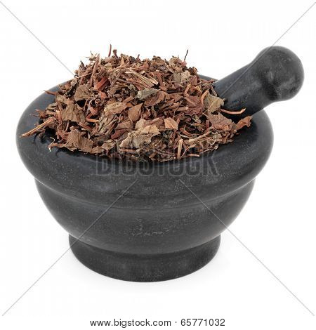 Houttuynia herb chinese herbal medicine in a black stone mortar with pestle over white background. Yu xing cao.