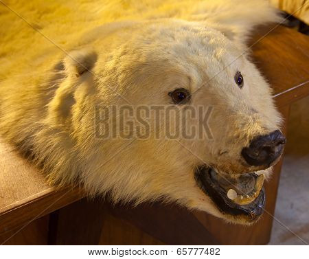 Fur Of Bear