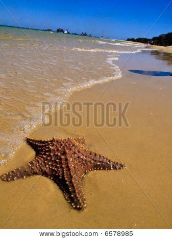 Starfish In The Sand At Waters Edge Moreton Island