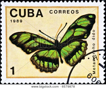 Postage Stamp Shows Butterfly