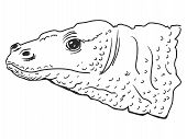 stock photo of komodo dragon  - hand drawn sketch illustration of Komodo dragon - JPG
