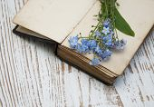 stock photo of forget me not  - Bunch of forget - JPG