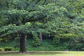 picture of pubic  - Green trees in pubic park and sunlight - JPG