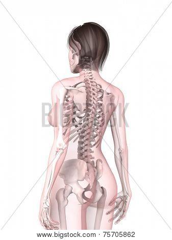 back illustration