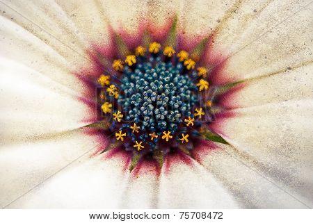 daisy with grunge overlay