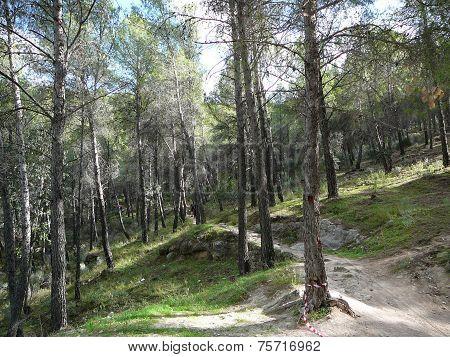 Forrest scene