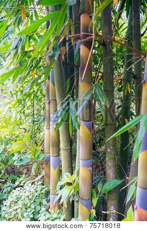Bamboo In Forest Grove Seem Healthy