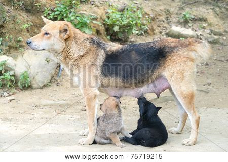 Dog Mother Feeding The Cute Puppy