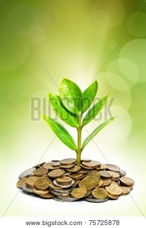 tree growing on coins