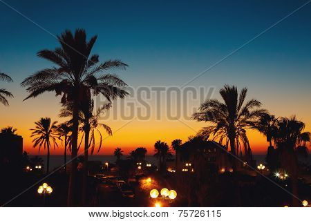 Summer Sunset At A Coastline With Palm Tree