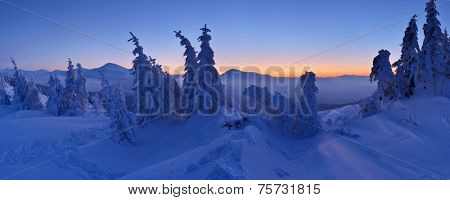 Winter landscape at dusk. Panorama of forest in snow