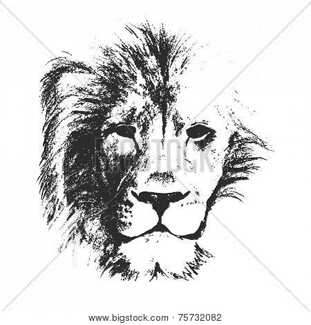 lion head. hand drawn. vector illustration.
