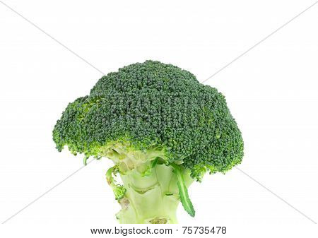 Close up of broccoli vegetable.
