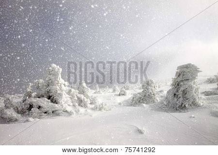 Christmas background of cold winter landscape with snow