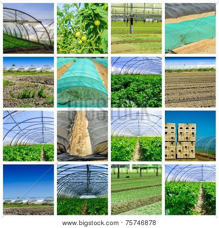 Collage Mix Of  Farming And Gardening In Greenhouse