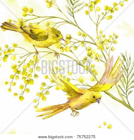 Watercolor Background of Mimosa, Yellow Bird