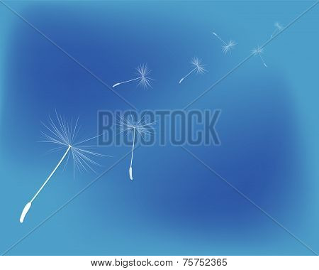 background dandelion fluff
