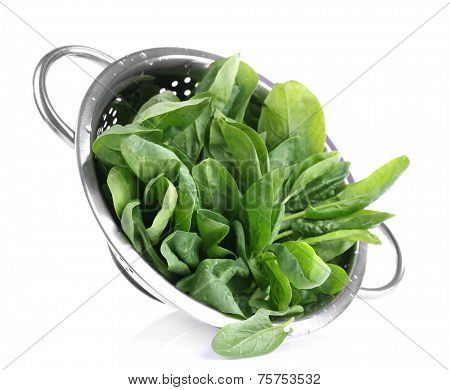 Tuft of fresh sorrel in metal colander isolated on white