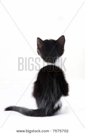 Kitten From Behind Against A White Background