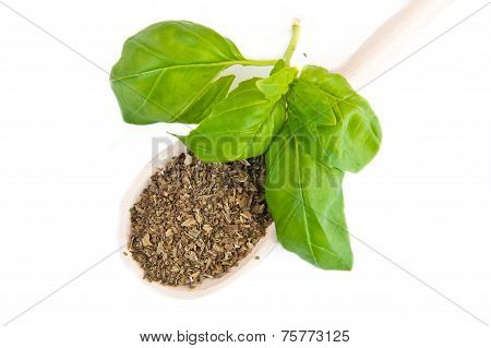 Dry And Fresh Basil