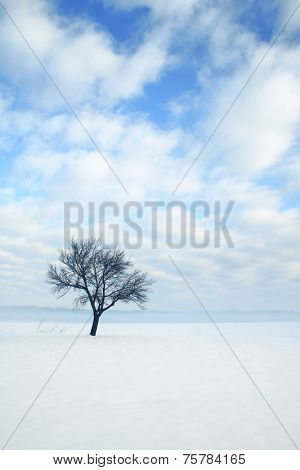 Lonely tree on a snow covered field