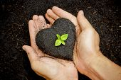 picture of fertilizer  - hands holding fertile soil as a heart shape with a young green tree in the middle  - JPG