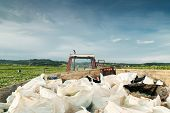 foto of heavy bag  - tractor heavy charged with harvesting bags at the field - JPG