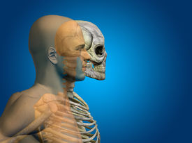 foto of cranium  - Anatomy concept or conceptual human man body chest - JPG