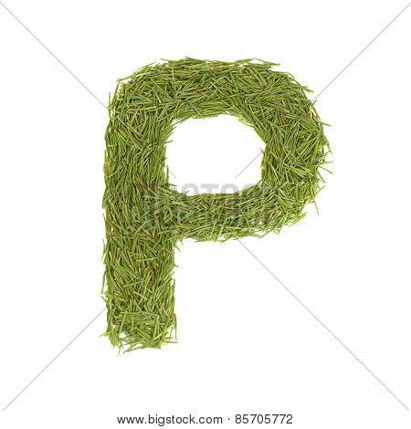 Green Alphabet, Letter P