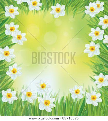 Vector daffodil flowers frame.