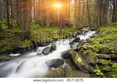 Mountain stream in green forest at spring time