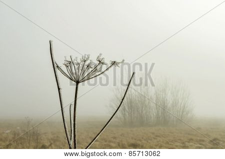 Stick In Fog