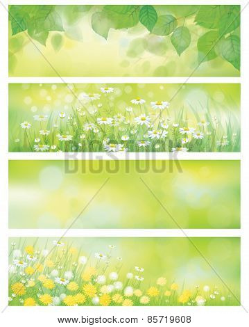 Vector spring nature banners birch tree leaves dandelion and chamomile.