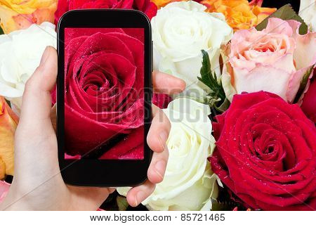 Tourist Photographs Of Fresh Wet Red Rose Close Up