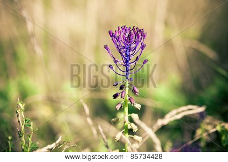 Medicinal Wild Spring Flowers