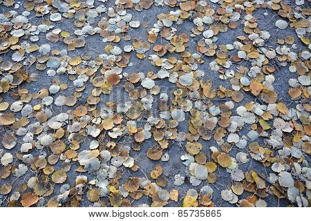 Autumn Leaves On The Road As A Background