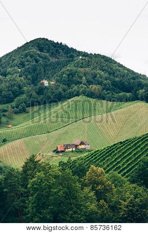 Vineyard in Styria vertical view