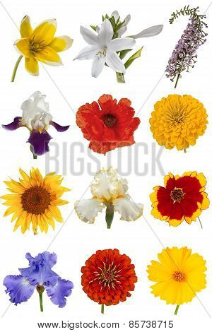 Flower Collection, Isolated On White Background