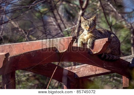 Cat on the gazebo