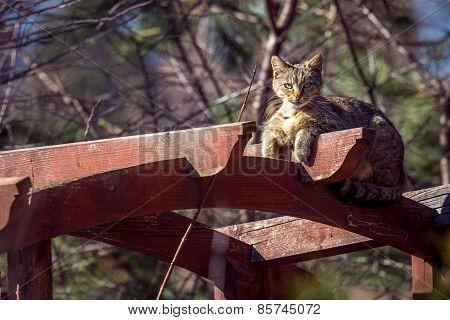 Cat on the gazebo