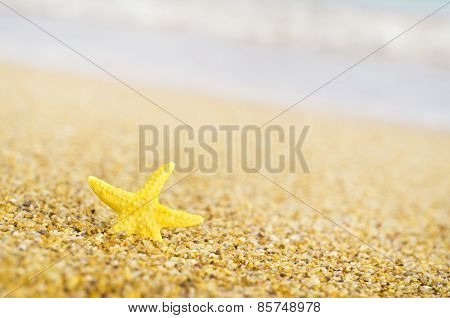 Starfish On Sandy Beach.