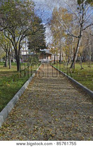 Walk lane, strewn with leaves