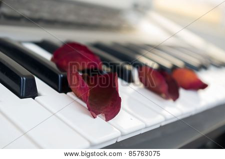 closeup shot of piano with red rose petals on top